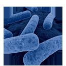 C. difficile Infektionen